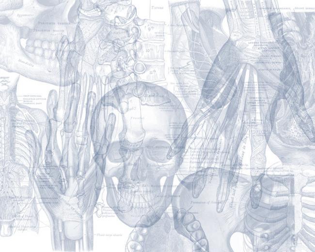 Ordine dei Tecnici Sanitari di Radiologia Medica e delle Professioni Sanitarie Tecniche, della Riabilitazione e della Prevenzione della Provincia di Enna